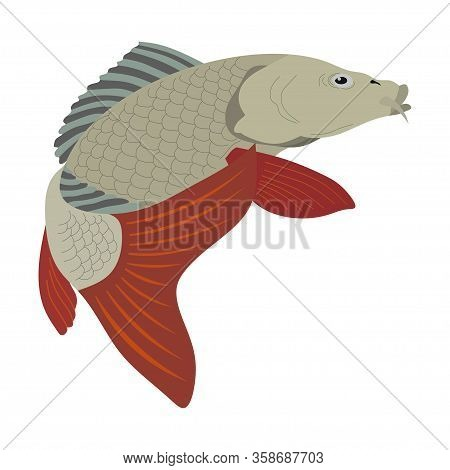 Image Of River Carp, Realistic Image Of Carp, Freshwater Fish, Logo For The Store