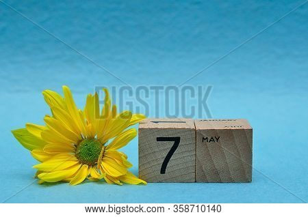 7 May On Wooden Blocks With A Yellow Aster On A Blue Background