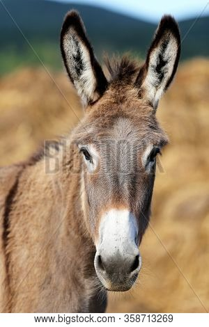 Donkey Outdoors In Nature Under Blue Sky Summertime