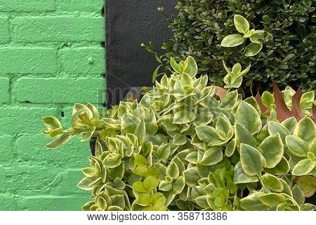 Green Black Warehouse Wall Close-up Hedge Plants