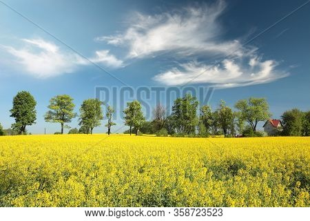 Countryside Oilseed field spring Nature landscape morning sunrise sunset trees Nature background Nature background Nature background travel Nature background Nature background tree Nature clouds Nature background yellow field blue sky Nature background.