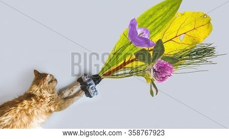 Red Cat With Photo Camera And Summer Flowers Lying On White Table. Banner Backgrond With Copyspace.