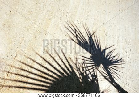 Black Shadow Of Tropical Plants On Tiles. Beautiful Style Of Light Background. Sunny Summer Day. Wal