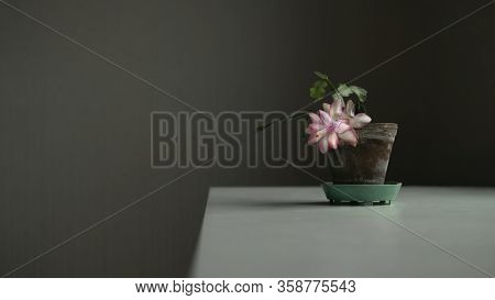 Blooming Pink Flower In Old Pot On White Table. Home Nature Backraund With Copyspace. Stock Photo.
