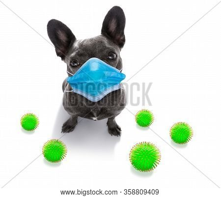 Sick And Ill French Bulldog  Dog  Isolated On White Background With  Face Mask And Viral Coronavirus