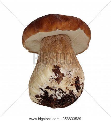 One Boletus Mushroom, Isolated On A White Background. Cepes.