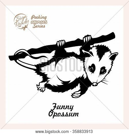 Possum Hanging On A Branch Isolated On White