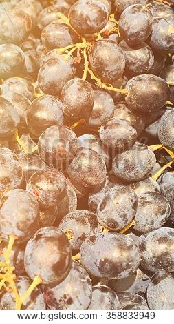 Close Up Of Berries And Leaves Of Grape-vine. Single Bunch Of Ripe Red Wine Grapes Hanging.