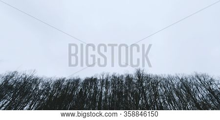 Banner Of Nature Background. Wallpaper Pattern. Dark Scary Park With Gray Clouds. Landscape Misty Pa