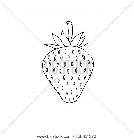 Vector Hand Drawn Doodle Sketch Strawberry Isolated On White Background