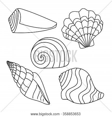 Vector Illustration. Set With Simple Shell Silhouettes. Drawing Of Black Lines On A White Background