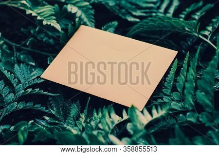 Blank Envelope And Green Leaves In Nature, Paper Card As Background, Correspondence And Newsletter C
