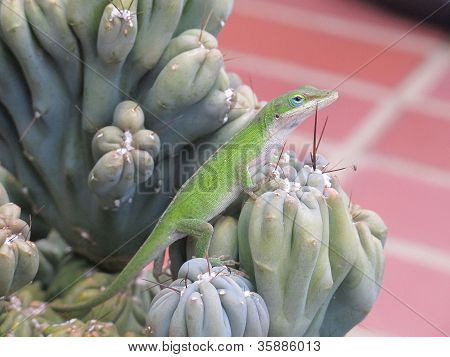 Posing green lizard on spiny cactus