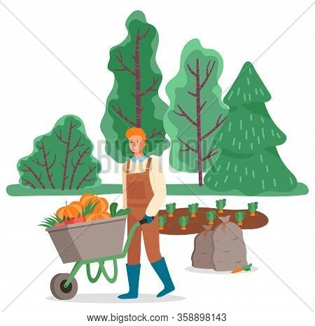 Man With Wheelbarrow Transporting Harvested Pumpkins From Field Or Plantation. Seasonal Work For Far