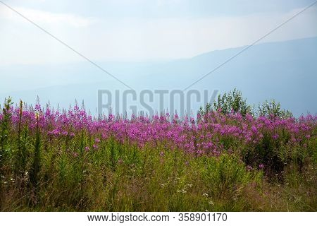 Landscape View Of Purple Spring Flower Field Against The High Mountains And Blue Sky