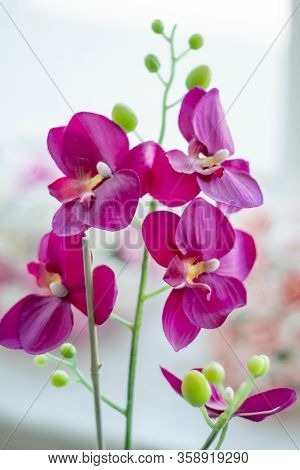 Pink Orchids For Interior Design. Shinny And Colorful Flowers. There Are Some Leafs Like Small Green