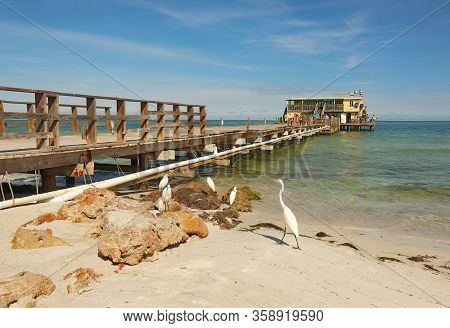 Anna Maria, Florida - November 24 2018: Great And Snowy Egrets Plus Fishermen At The Rod And Reel Pi