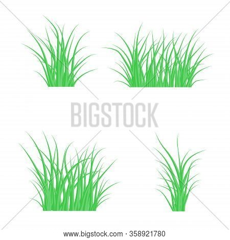 Set Green Grass, Isolated On A White. Vector Illustration With A Beautiful Green Grass. Grass Backgr