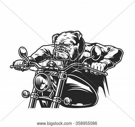 Angry Bulldog Head Motorcyclist Riding Motorbike In Vintage Monochrome Style Isolated Vector Illustr