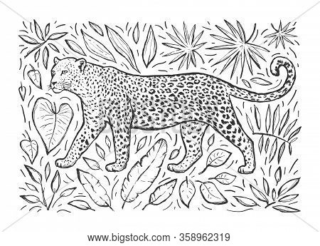 Sketch Of A Leopard With Tropical Plants. Wild Animal. Vector Cartoon Color Illustration With Big Ca