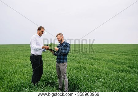 Two Farmer Standing In A Wheat Field And Looking At Tablet, They Are Examining Corp. Young Handsome
