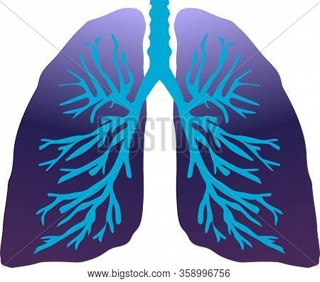 Human Lungs With Trachea And Branches Vector Illustration