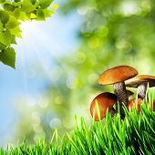Abstract natural backgrounds with beauty mushrooms for your design poster