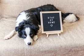 Stay Home. Funny Portrait Of Cute Puppy Dog On Couch With Letter Board Inscription Stay At Home Word