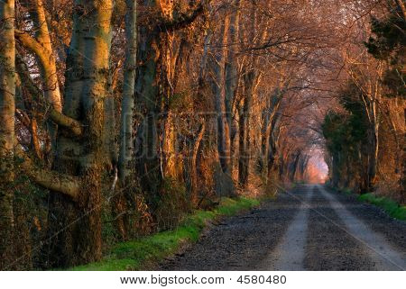 A Golden Sunrise On A Covered Country Road
