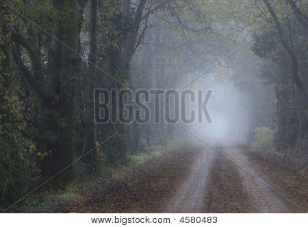 Foggy Road Travels