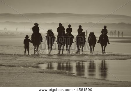 Camels Ride On Beach
