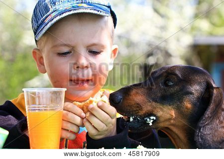 three-year-old cute boy sharing his snack with his dachshund sitting next to him poster