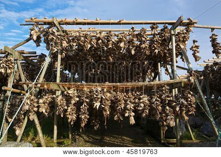 poster of Traditional way of drying stock fish on Lofoten islands in Norway