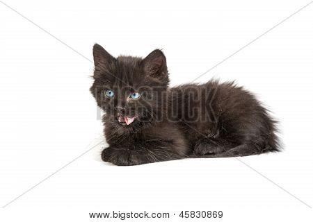 Cute Black Kitten On  A White Background