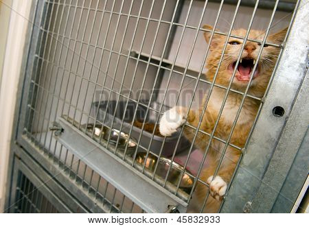 Homeless cat in a cage in an animal shelter poster
