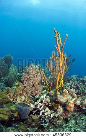 Coral Reef Yellow Rope Sponge