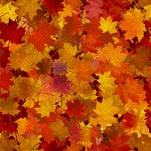 Vector seamless background: a lot of maple autumn leaves on the ground. poster