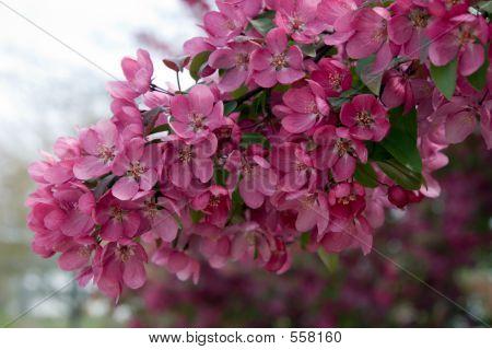 Hanging Pink Splash