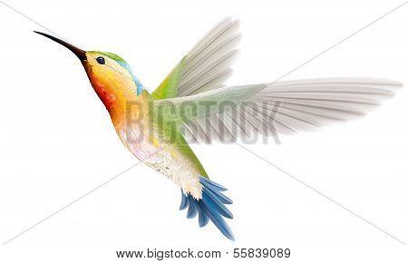 Hummingbird On A White Background