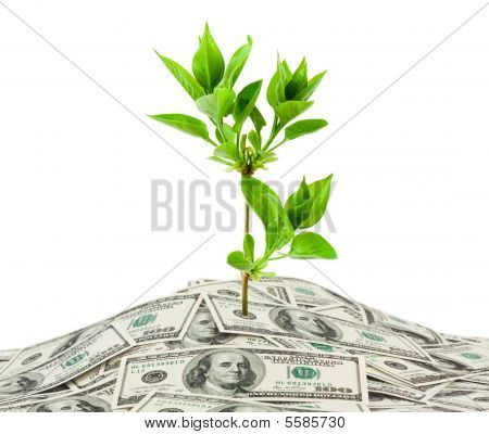 Money and plant isolated on white background poster