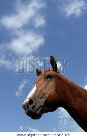 Angled Horse Head