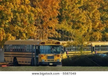 School Bus Line Up On A Fall Day