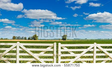 Beautiful White Picket Fence