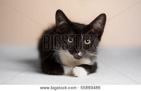 The Yellow-eyed, Black Cat Watching Children And Away