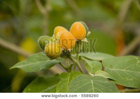 Velvet Peach