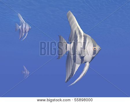 Angelfishes underwater - 3D render
