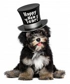 A happy smiling havanese puppy dog is wearing a black Happy New Year top hat isolated on white background poster