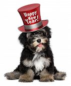 A happy smiling havanese puppy dog is wearing a red Happy New Year top hat isolated on white background poster