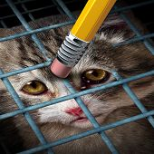 Animal adoption concept and rights as a kitten behind a cage being erased by a yellow pencil eraser as a hope metaphor for adopting pets from a shelter giving freedom to caged orphaned cats and dogs. poster