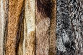 Close up of an animal colored fur texture arranged in coats poster